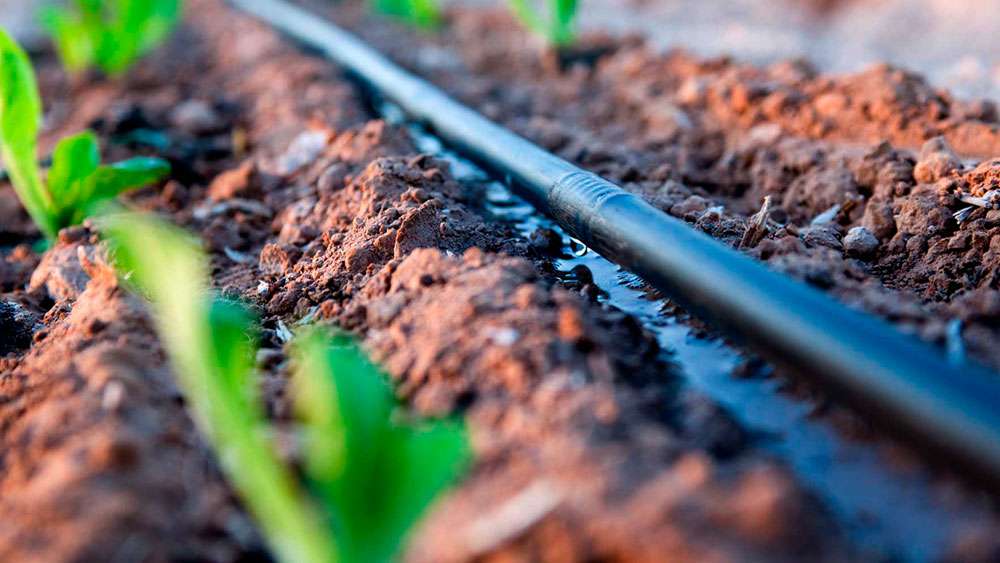 Drip irrigation system hose close up wetting the soil next to small green seedlings
