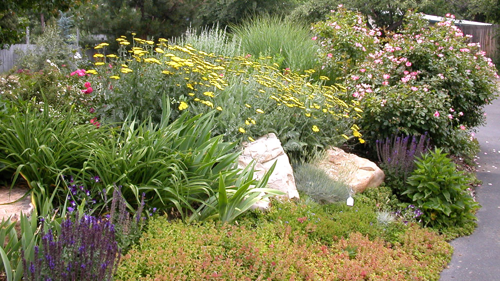 A xeriscaped bed with a variety of lush greenery from grasses and shrubbery to yellow, pink, purple and red blossoms with large accent boulders